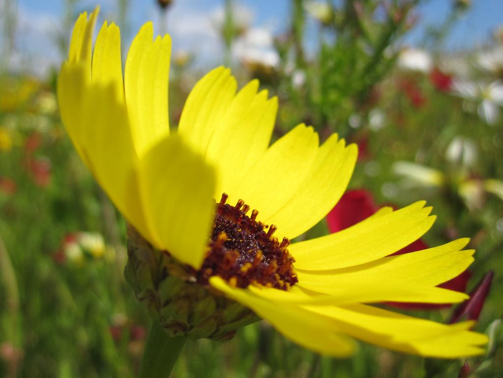 Wild Flower Cardiff Bay